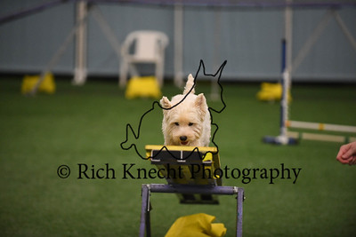 Artful Dodgers CPE Agility Trial August 19-20