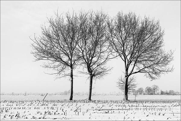 Winter (24 januari 2015)