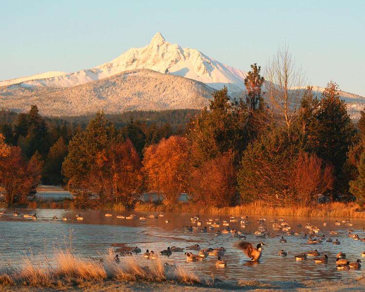 fall-mt-w-geese-110805-IMG_.jpg