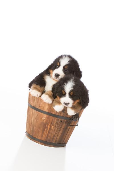 2013-Pearson Pups-Jun02-0454.jpg