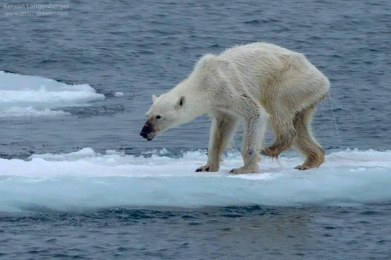 polar-bear-tragedy-svalbard-norway-1.jpg
