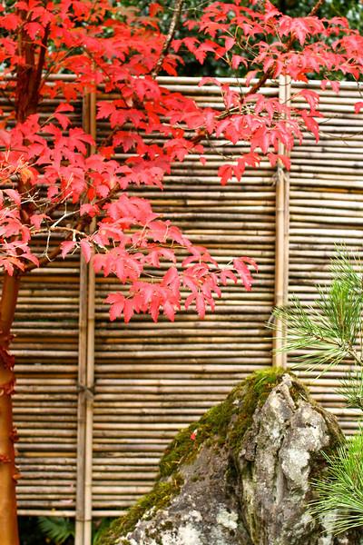 Portland Japanese Garden  11-11-11  3539.jpg
