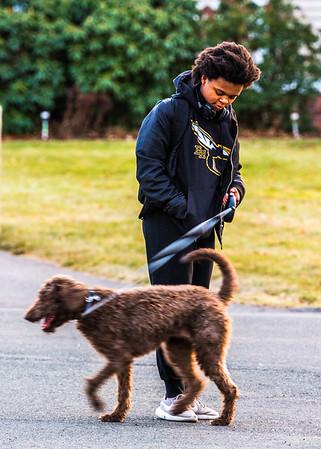 Walks with Zoe