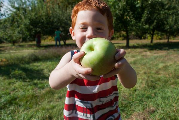Apple & Pumpkin Picking at Palazzi Orchard - 2014