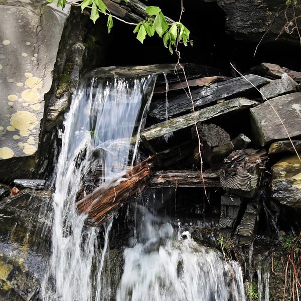 2011 5-27 Foliage