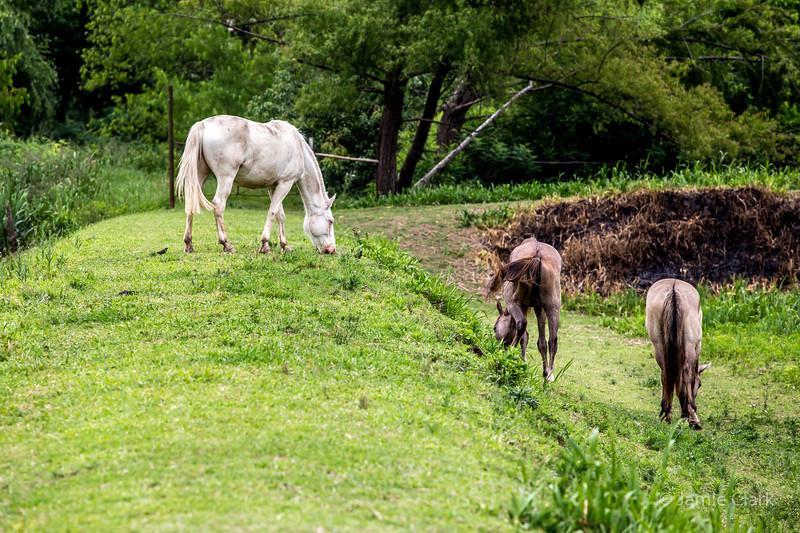 Horses at Bonanza Deltaventura, Tigre