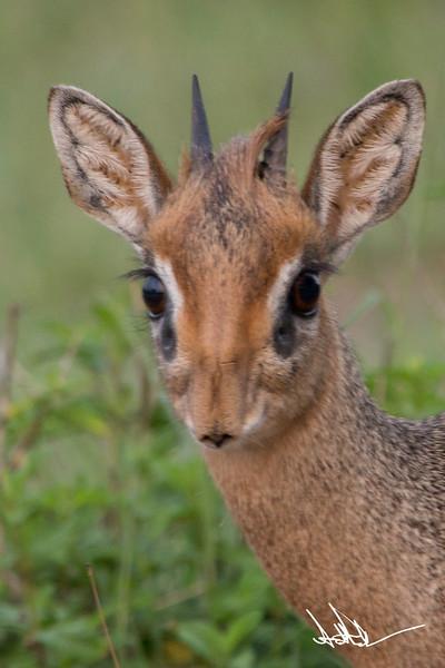 AntelopeS-15.jpg
