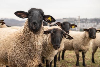 36375 Animal Science Farm Enviro Photos Jan 2020