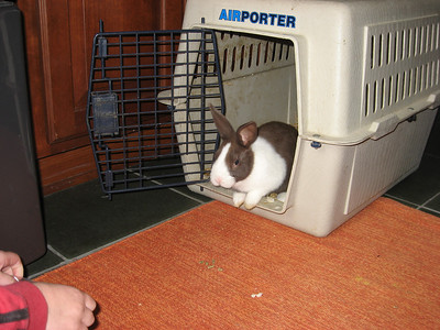 2008 Coco the Bunny visits