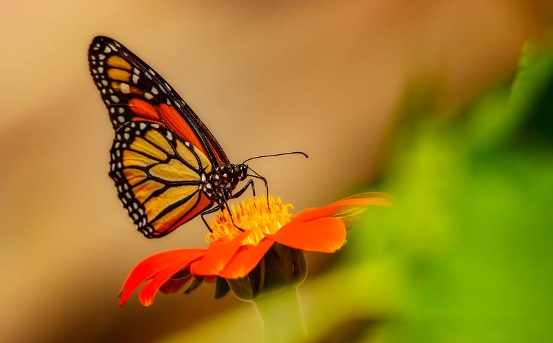 Butterfly-125.jpg
