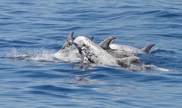 Marine Mammals