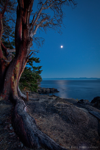 Madrona by Moonlight