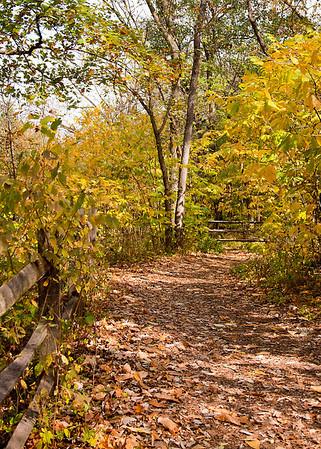 Overland Park Arboretum (Autumn Afternoon)