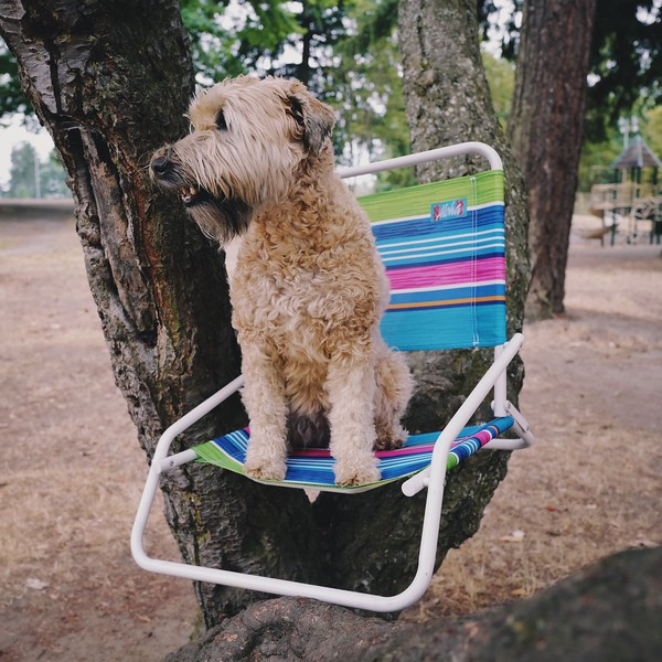 Tree House Dog