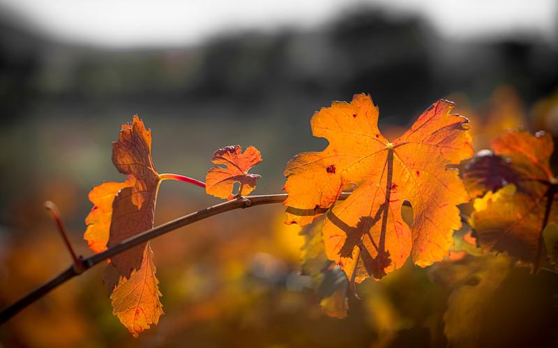Fall Colors '20