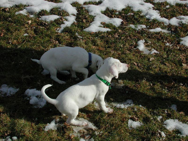 Feb 05- Puppies 015.jpg