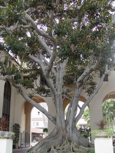 Tree in Los Angeles
