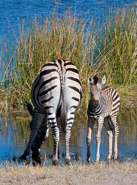 Botswana-20110715-2839.jpg