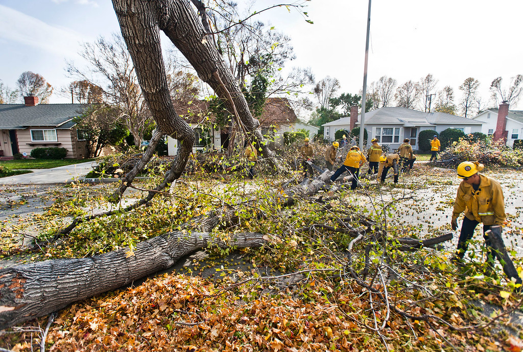 . Los Angeles County firefighters cleanup debris after a tree fell across the 9900 block of Broadway Street in Temple City on Thursday, Dec. 1, 2011. Winds gusting up to 80 miles an hour whipped through the west San Gabriel Valley overnight causing trees to snap and power lines to fall. (SGVN/Staff photo by Watchara Phomicinda/SVCity)