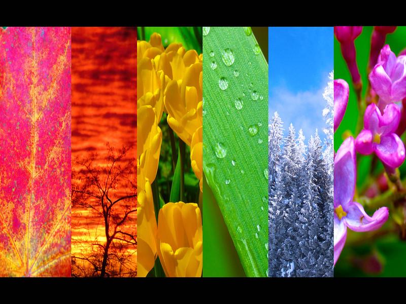 JLC_Collage_0002.jpg