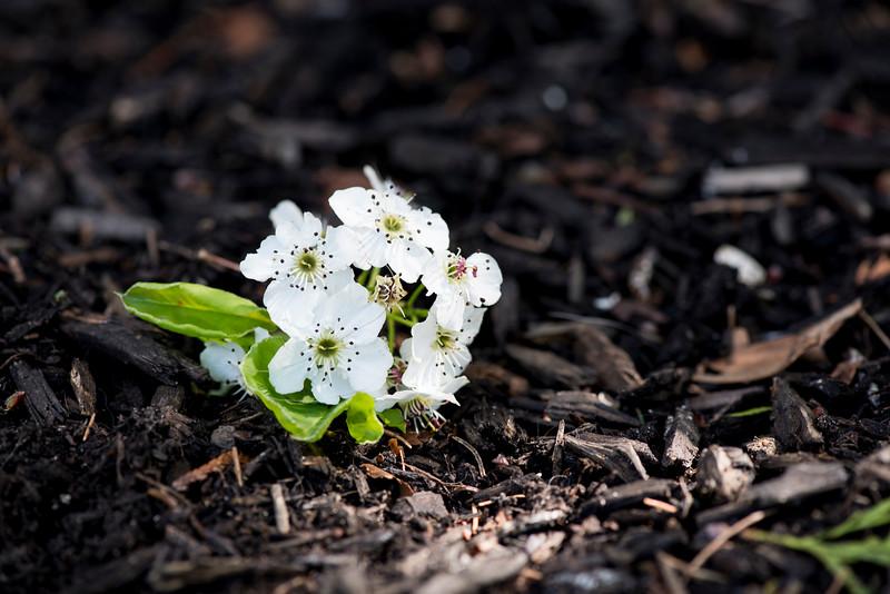 Spring Flower 01.jpg