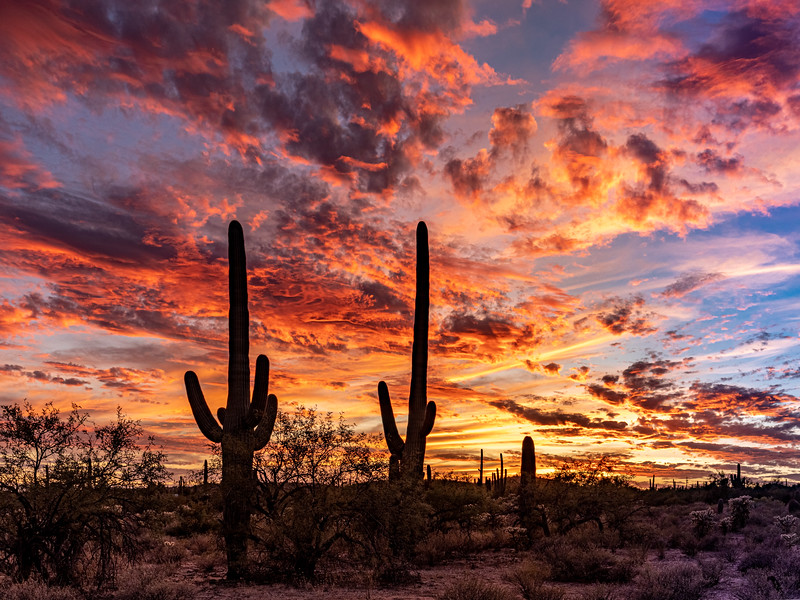 Sabino Sunset 11-2-2019-.jpg