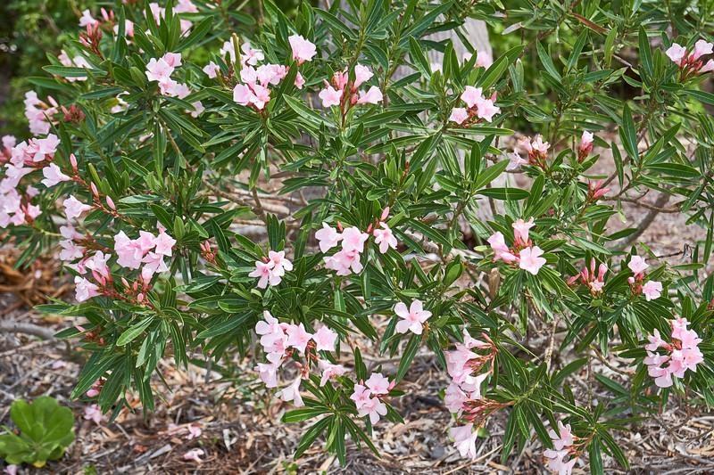 Useppa-Botanical-Walk-024.jpg