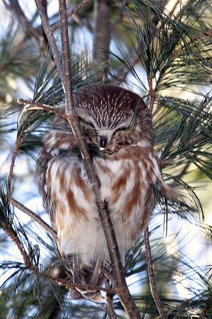 Owls - One Each