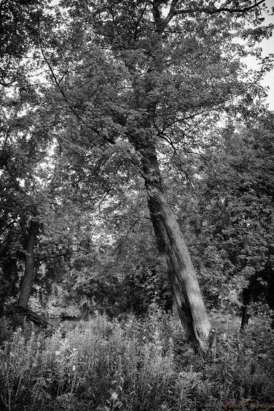 Tree Tilt