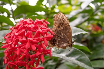 Butterfly Sanctuary Key West