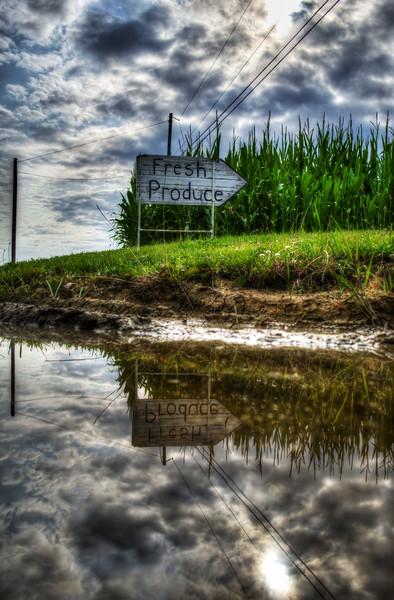 reflection - fresh produce(p).jpg