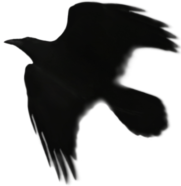 Raven 17.png
