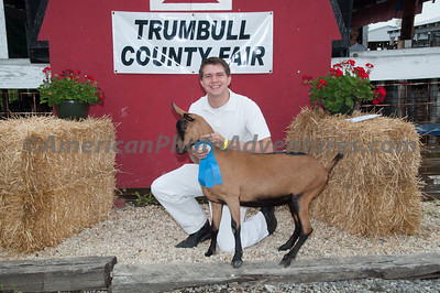 July  17 Market Dairy Goat Judging