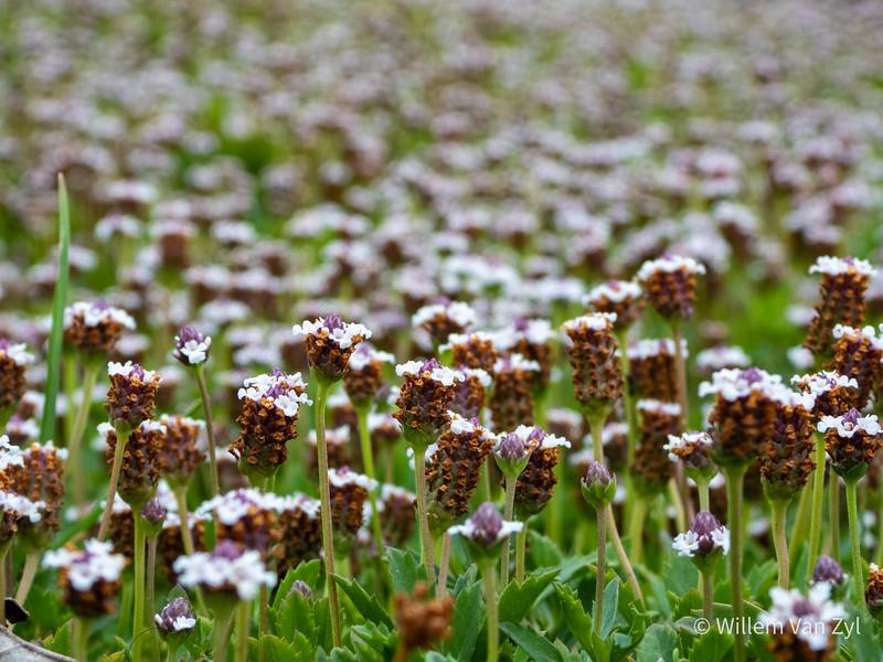 20200122 Garden Photos from Grotto Bay, Western Cape