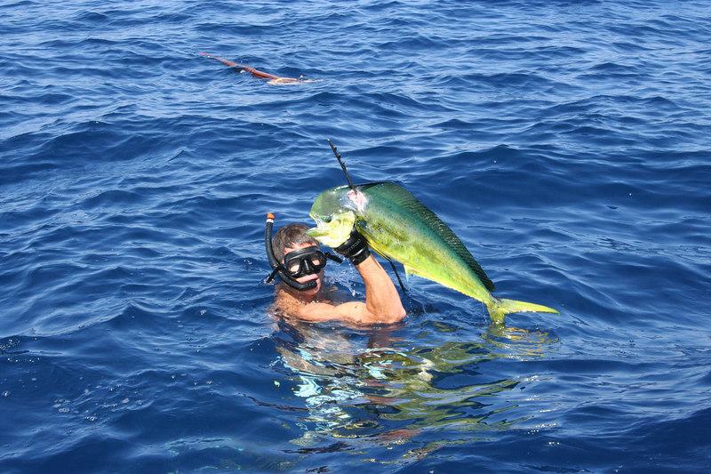 fish  2356.jpg