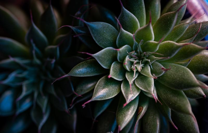 succulent-1148.jpg