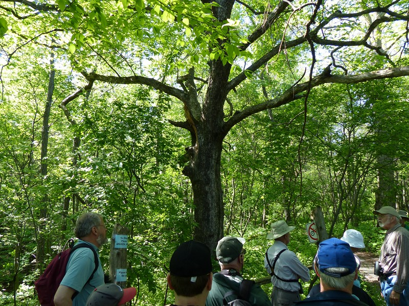WBFN members gathered at main trail into the Woods.