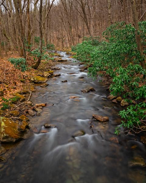Along Jonathan Run Trail