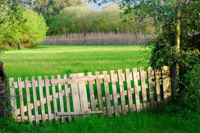 Baixo Vouga - Cacia - Aveiro - 20100324 - 6305_raw.jpg