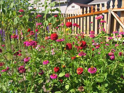 The Garden - August 2007