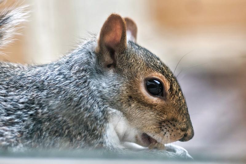 squirrel001.jpg