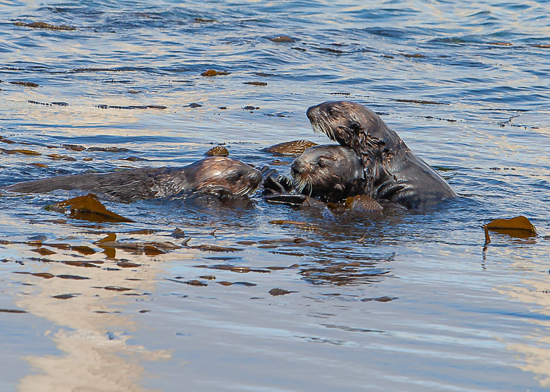 Morrow Bay Otters and AG Roosters-41.jpg