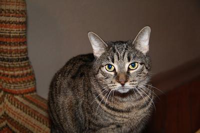 Lori and Jeff's Cat, Tamaqua (1-17-2012)