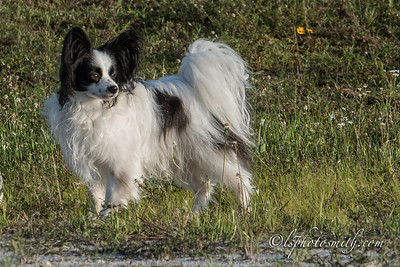 Tailwaggers tracking
