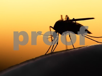 Freaking out about Zika virus? West Nile is the real killer