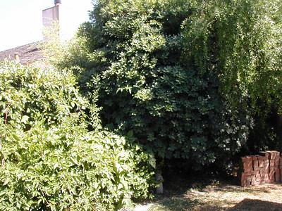 garden m
