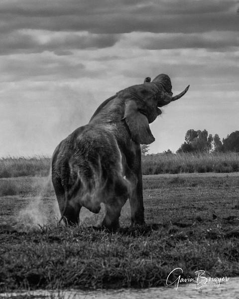 Elephants Botswana-4.jpg