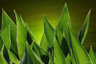 7. Flore et Nature