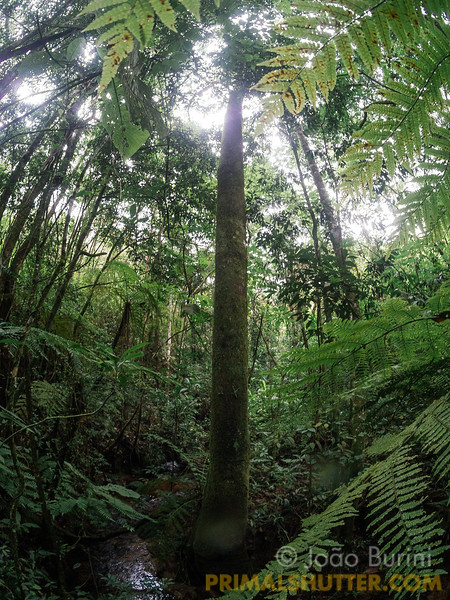 Creek in the atlantic rainforest