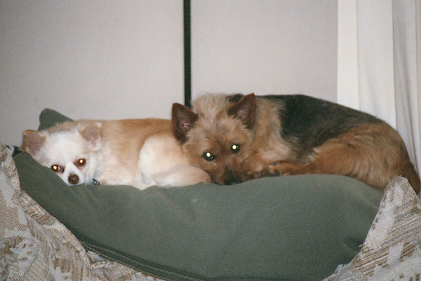 dogs 2005